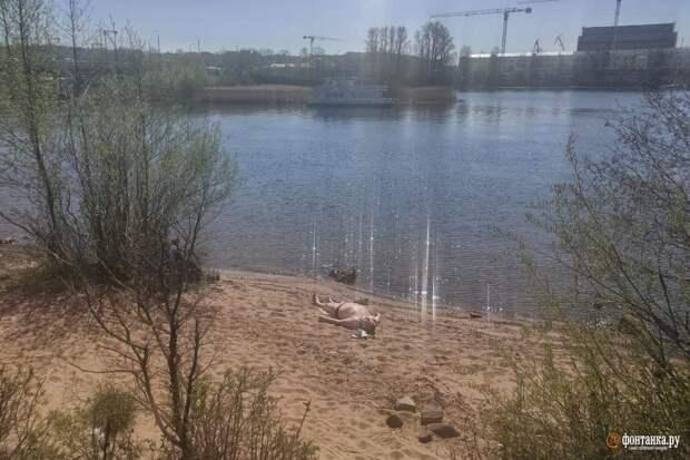 Петербургская погода идёт на рекорд: синоптики обещают до плюс 28 градусов, грозы и град
