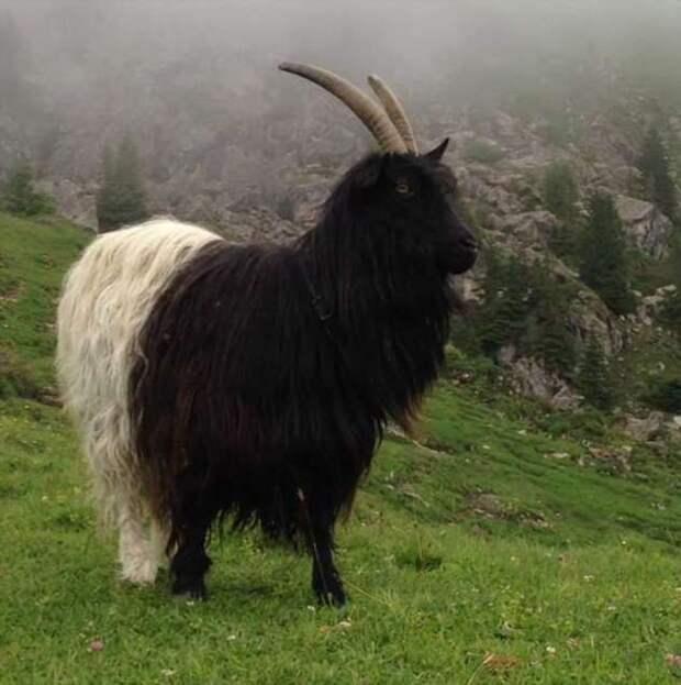 20+ животных, которых природа раскрасила в момент полета бурной фантазии