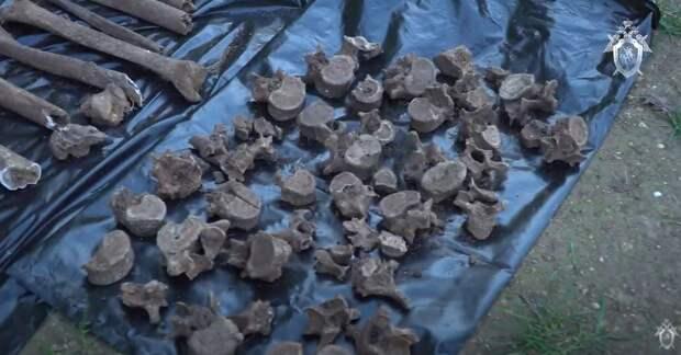 В Севастополе эксгумируют останки мирных жителей, убитых во времена Великой Отечественной войны