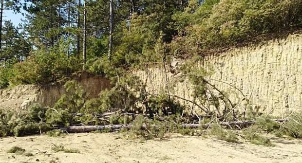 В Симферополе уничтожают сосновый лес, освобождая землю под застройку