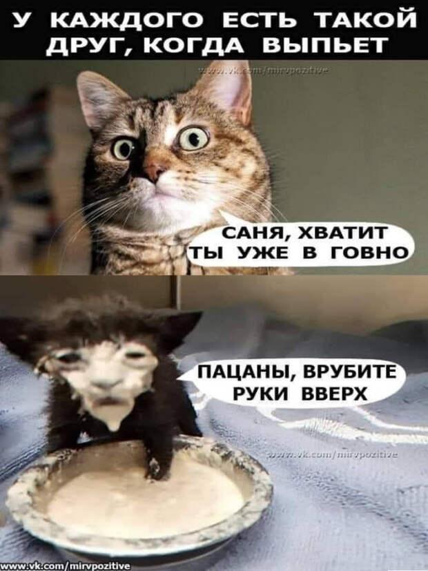 Смешные шутки в картинках