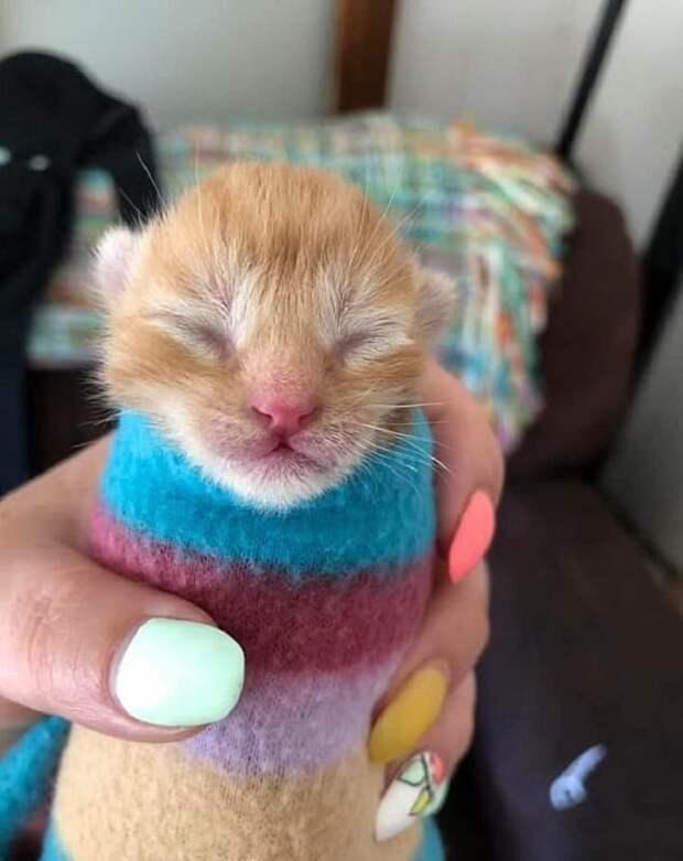 Котенок укутанный