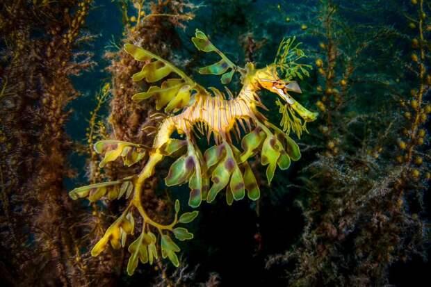 Лучшие места в мире для подводного плавания