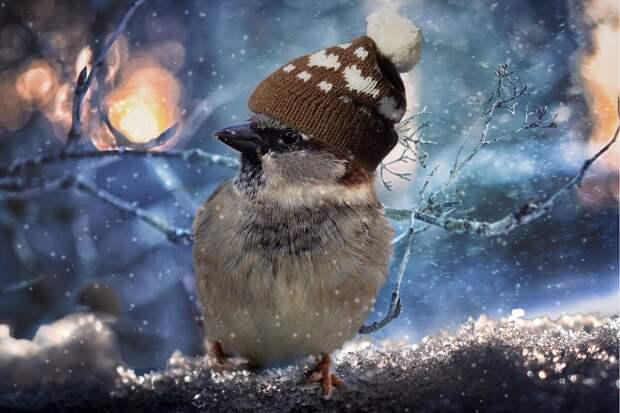 Сколько птиц смоглобы спастись, еслибы они носили шапки?