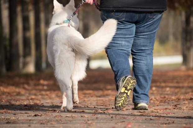 Место обустройства площадки для выгула собак в Молжаниновском обсудят на собрании