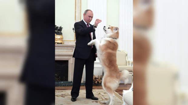 Владимир Путин поручил подготовить поправки о ведении учета домашних питомцев