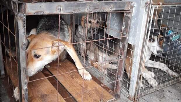 В Пронском районе отловили бродячих собак, загрызших пять коз