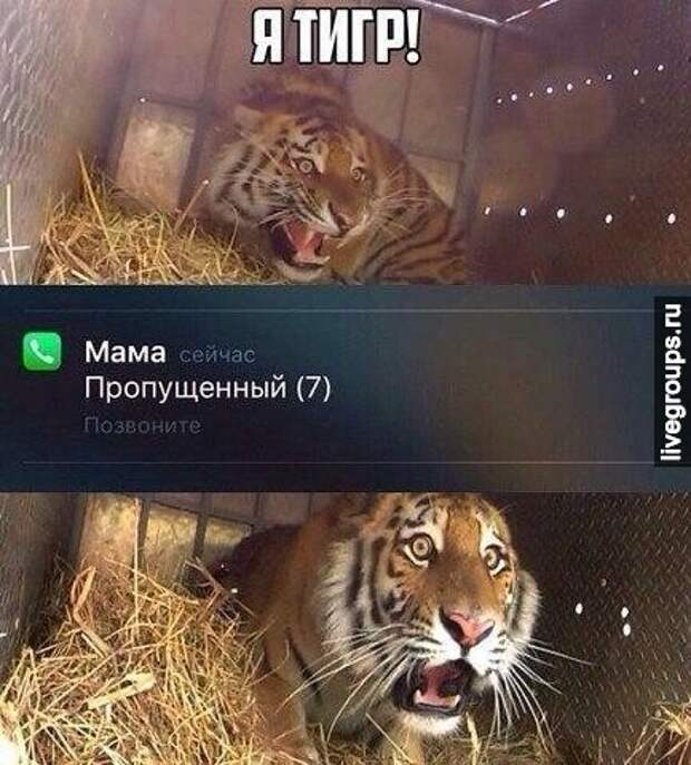 Я тигр!?