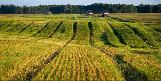 Названы крупнейшие владельцы земель сельскохозяйственного назначения в России