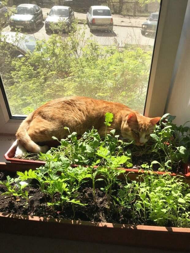 Люди выбросили своего рыжего кота из окна девятого этажа волонтер, кот, кошка, приют, рыжий кот