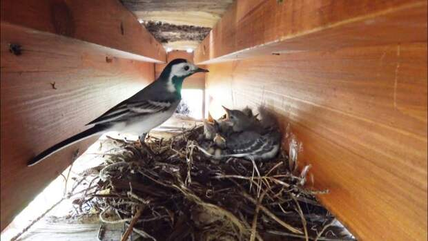 Что делать, если нашел выпавшего птенца? Отвечаем на главные вопросы про весенних птиц
