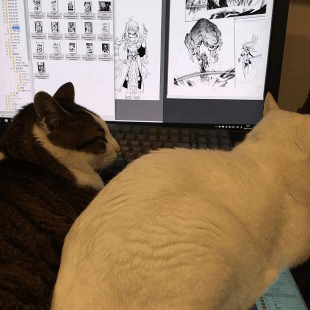 Художник установил специальное устройство, чтобы не дать котику войти в комнату