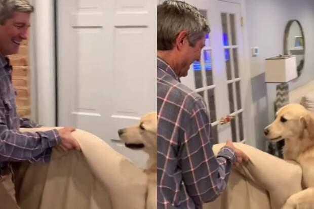 Заботливая собака помогла хозяину перетащить лежанку ивосхитила интернет