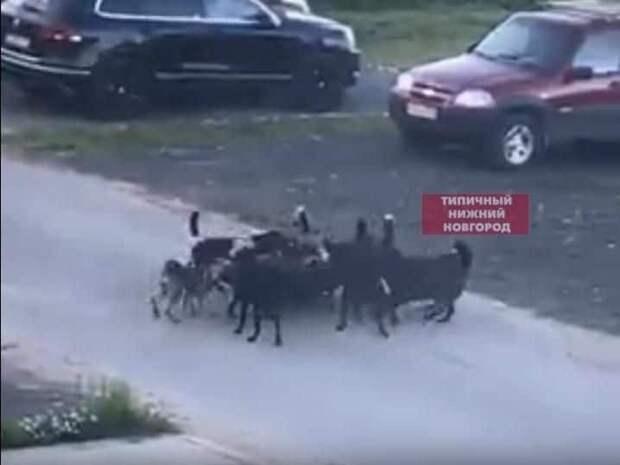На стаю собак жалуются жители поселка Ждановский - фото 1