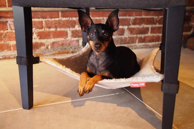Собачья жизнь в гамаке