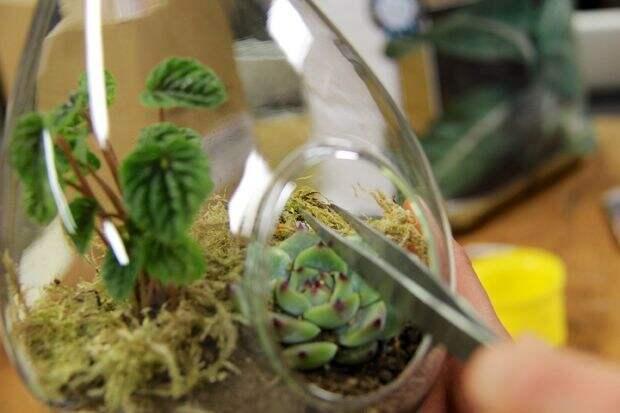флорариум своими руками в банке 06