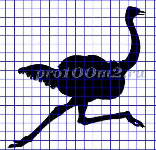Силуэт страуса