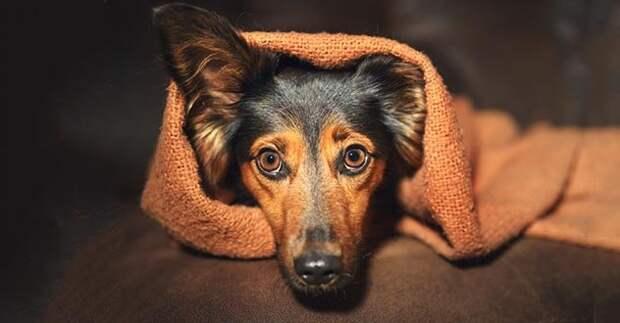 Интересные факты о разуме собак