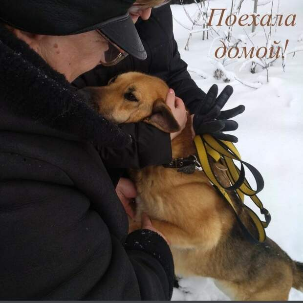 Три года назад у бездомной собаки со щенками пытались отобрать одеяло