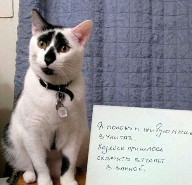 черно-белый кот с запиской