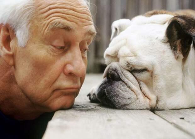 Старые друзья животные, собака, друзья