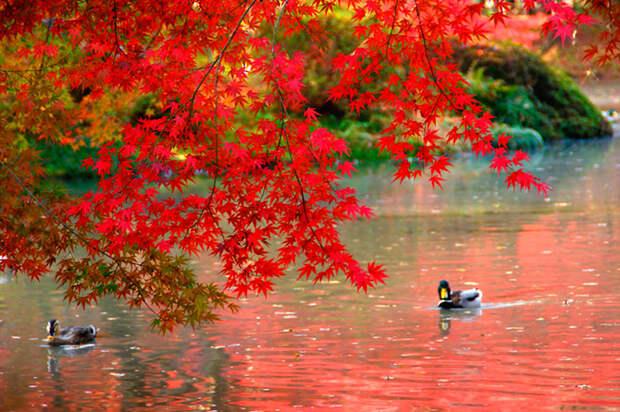 Осенний Киото, просто шикарные фотографии