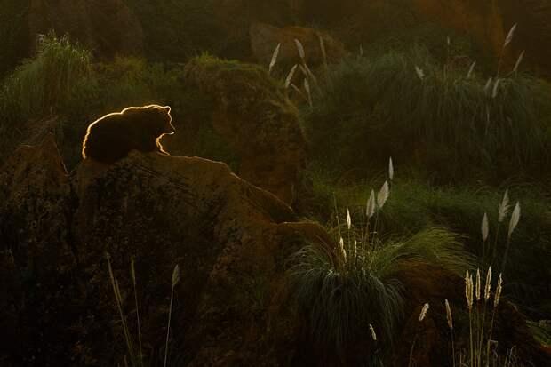 Алиса в дикой природе. Да, пусть не те же места. Но мишек, как у Шишкина в «Утре в сосновом лесу», я видел.