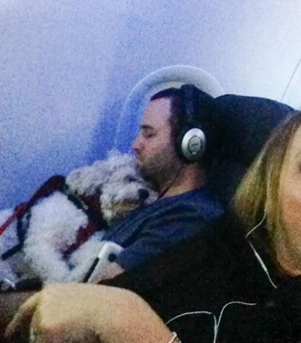 10. Сладкие сны борт, животные, пассажир, перелет, полет, самолет, фото