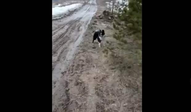 Мертвых собак напривязи удерева обнаружили вСвердловской области