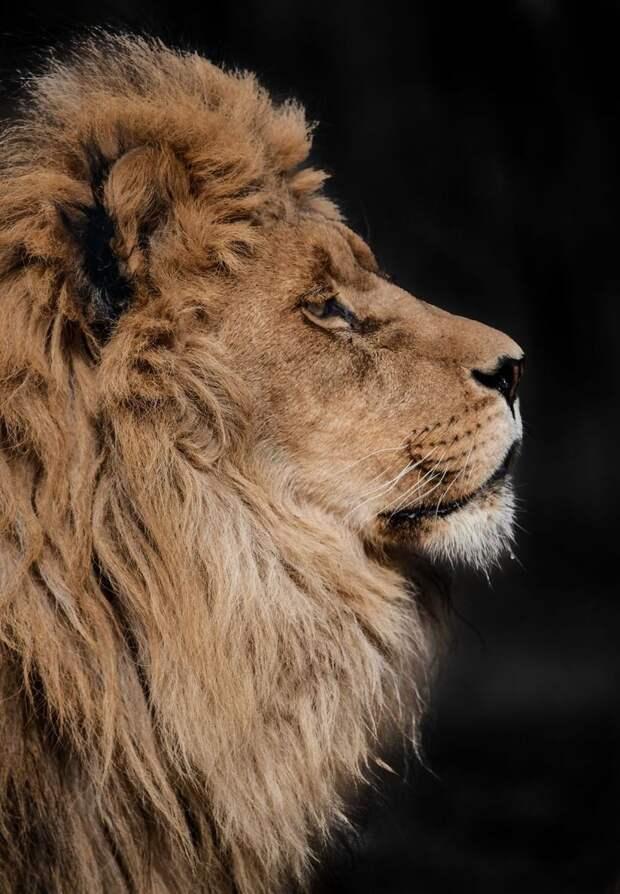 Горан Анастасовски в своих снимках показывает, насколько великолепны животные