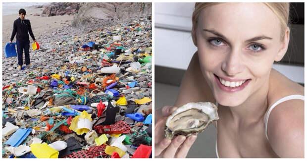 Любите морепродукты? Тогда вы регулярно едите пластик
