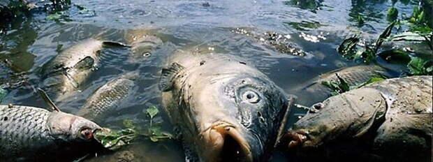 Днепр становится болотом и уничтожает Чёрное море