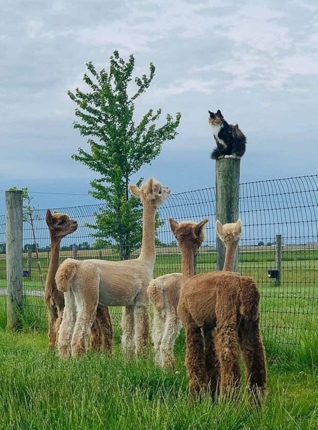 16 домашних животных, которые к своей миссии – насмешить человека, подошли ответственно