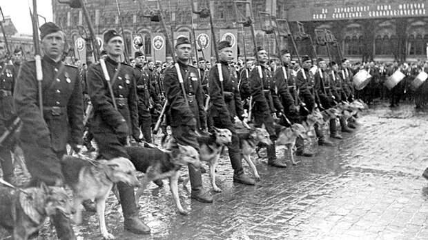 Собачьи диверсии. Какой вклад внесли четвероногие бойцы в Победу