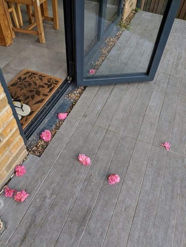 Таинственный поклонник: каждый день милейшее существо дарило девушке лепестки роз