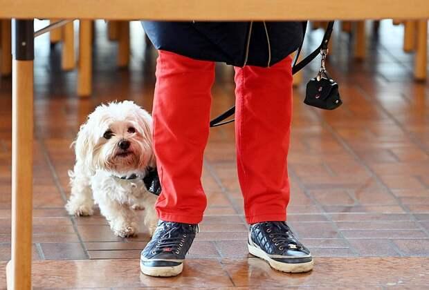 Путин поручил правительству разработать закон об учёте домашних животных