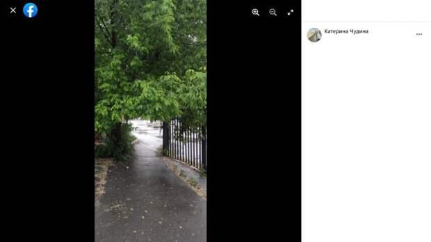 На Алтуфьевском шоссе ветки деревьев мешают проходу пешеходов
