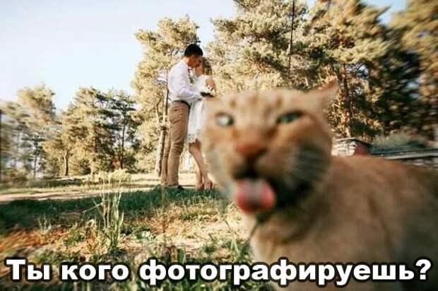 Смешные и эмоциональные картинки с надписями (11 фото)