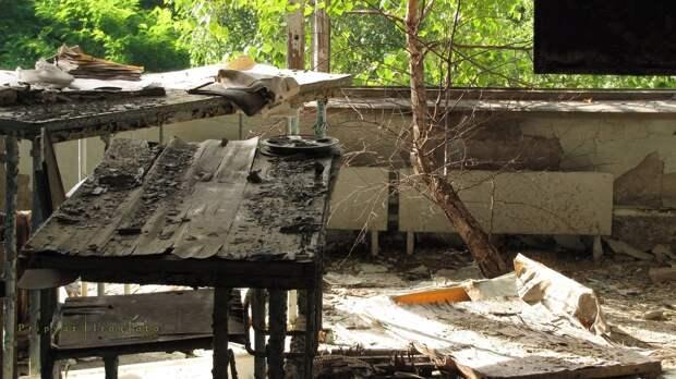 chnpp11 Оживающий Чернобыль