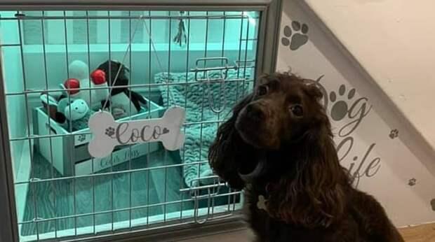 Дом для любименькой собаки: питомица всегда жила в клетке, но хозяева сделали ей подарок