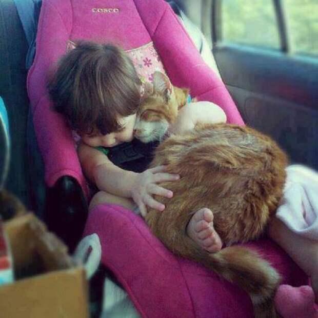 дети должны расти с домашними животными (5)