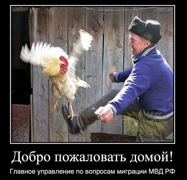 А нас то за що! Иностранцев - участников массовых беспорядков в поддержку Навального выдворяют.