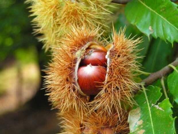 Знакомимся с экзотическими фруктами (Ч. 8-я)