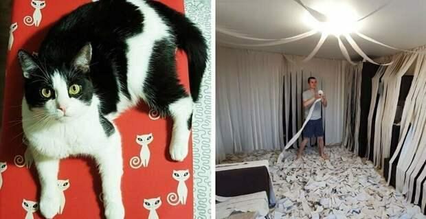 Хозяева сделали коту игровую комнату из сотни рулонов туалетной бумаги, и это настоящий кошачий рай Пусик, бумага, видео, животные, кот, рулоны, хозяева