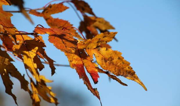 Холода придут в Приморье: синоптики поделились прогнозом погоды на 27 сентября