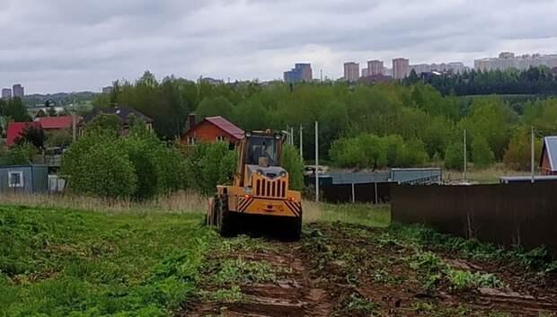 Борщевик начали уничтожать в микрорайоне Дубровицы Подольска