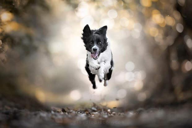 Супер собаки в фотографиях Клаудио Пикколи 28