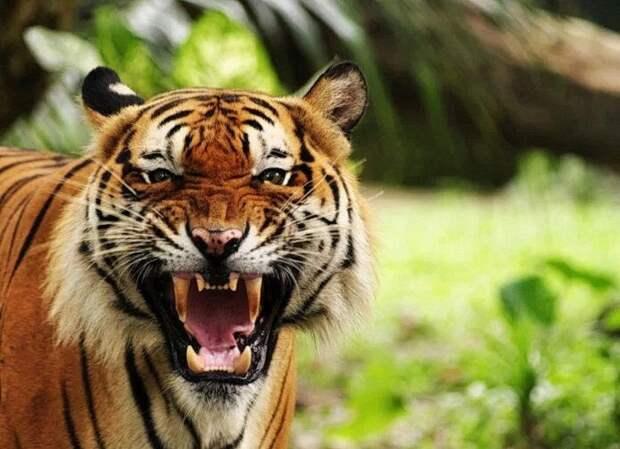 Популярные китайские фразы на основе иероглифа, обозначающего тигра: 虎