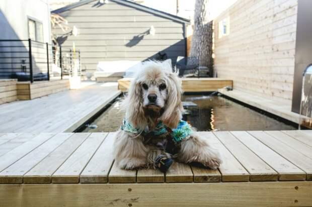 Дом престарелых для четвероногих: Стив Грейг берет себе животных в возрасте и обеспечивает им спокойную жизнь