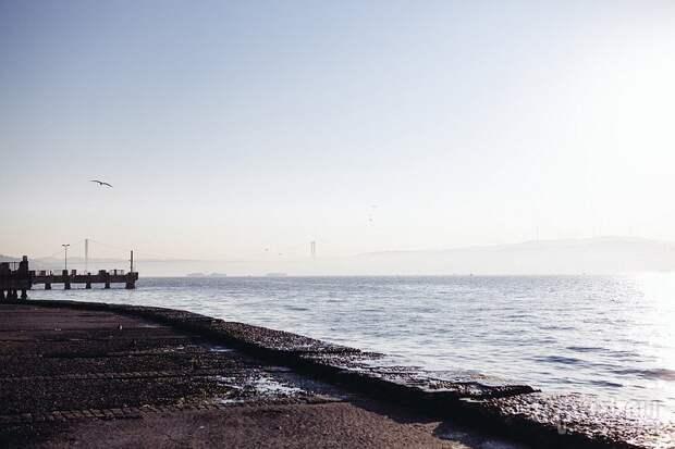 Мраморное море в Стамбуле покрылось опасной для рыб слизью